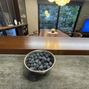 自宅のブルーベリーの収穫&ネットショッピング