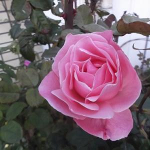 脇の下の筋膜リリース 12/12 (木) 商品交換