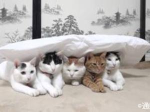 枕が悪いとき・枕のせいじゃないとき