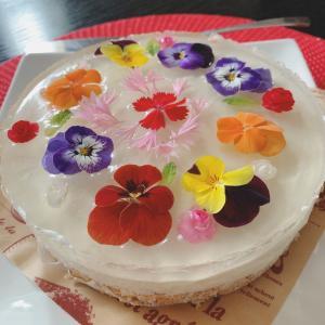 お花のチーズケーキ作りたかった~(o^―^o)ニコ