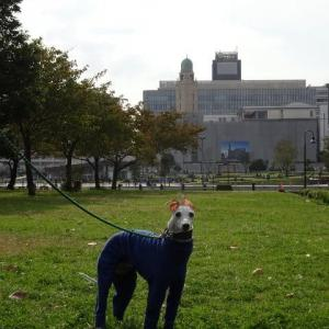 秋の横浜はイベントたくさん かながわ畜産フードコレクション