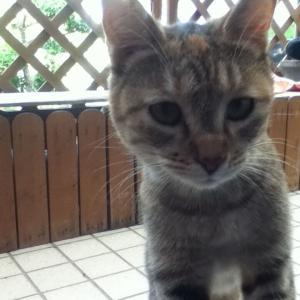 猫は腎臓病と知っている?!