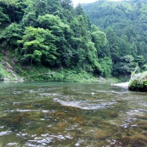 釣果が伸びない原因はやはりコレか 5回目の美山川