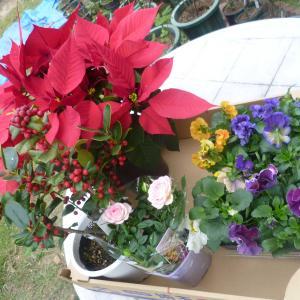 扁桃腺でもPCR検査 お花を買って・・・ ソンブレイユ アイスバーグ マウントシャスター ミルフィーユ