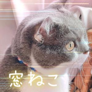 ボカロ〜猫