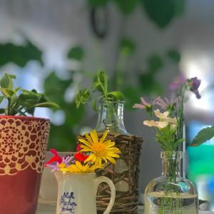 講師としての心構え3ナイ運動!で可能性の花が咲いていく。