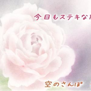 今日のバラとバレンタインデー