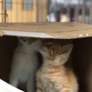 子猫の保護・里親探しを娘と二人三脚で(第1話〜奇跡の出会い)