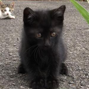 子猫の保護・里親探しを娘と二人三脚で(第2話〜黒猫パニック)