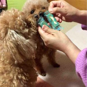 歯みがき嫌いな犬だけど、がんばるよ。