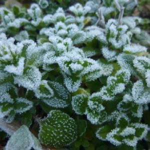 今朝は、霜がすごかったです。