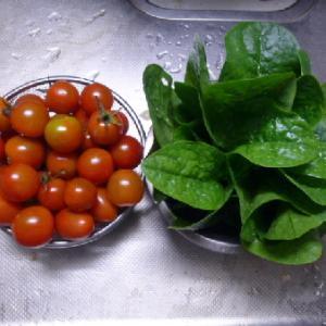 トマトとツルムラサキ