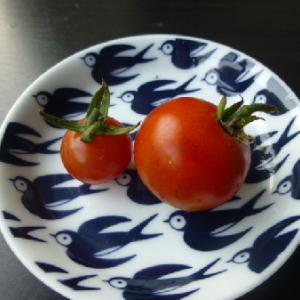 トマトが、赤く色づいていました。