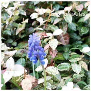 ◆お花の力で気持ちだけでも明るくなりたいです!