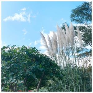 ◆秋のススキが季節を知らせてくれます