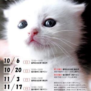 10/20(日)猫の譲渡会