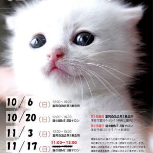 11/17(日)◆猫さんの譲渡会(時間変更)