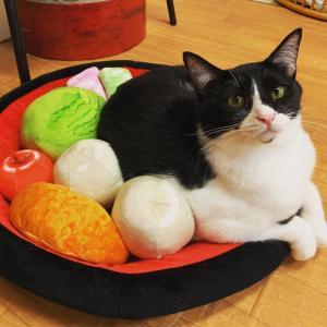 あんみつベッドは猫ホイホイ
