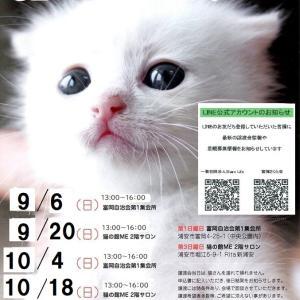 明日9/20◆キャットルームお休みと譲渡会