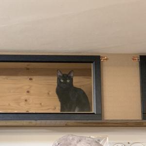 あの、猫清水氏来たる