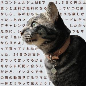ネコンシェルジュME★5500円以上送料無料キャンペーン