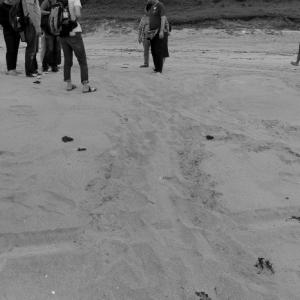 種子島アカウミガメ保全ボランティア