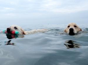 海の中の懲りない面々 2020 。