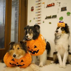 かぼちゃのロッキー
