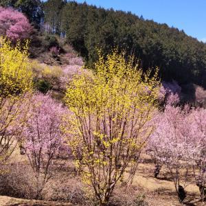 里山の春景色