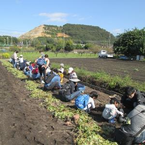 芋掘り体験       2020-10-25