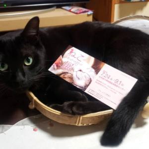 『猫がかわいいだけ展』♡