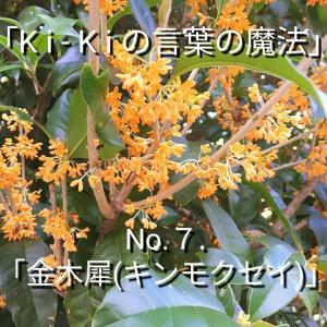 「Ki-Kiの言葉の魔法」No. 7 .「 金木犀(キンモクセイ) 」