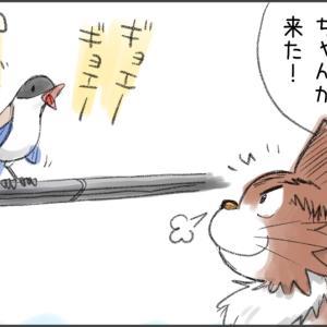 猫マンガ「広大とオナガ」