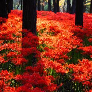 秋分の日/霊性が目覚める日