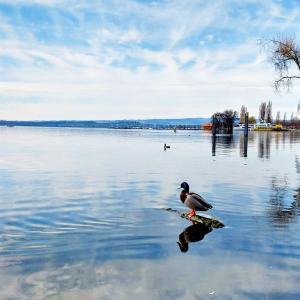 ツークの湖畔沿いで春の散歩