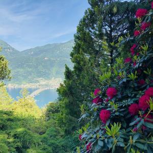 スイスの南国風リゾート地・ティチーノの魅力