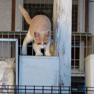 わし、中猫です 難儀やなぁ・・・