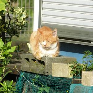 わし、猫のおっさんです ええ天気やし・・・