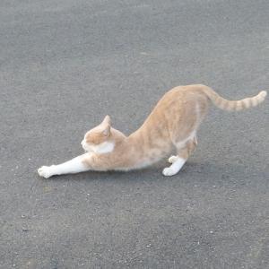 わし、中猫です よう見といてな!