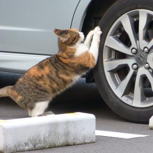 わたし、猫の若おばさんです 爪でも研いどこか・・・