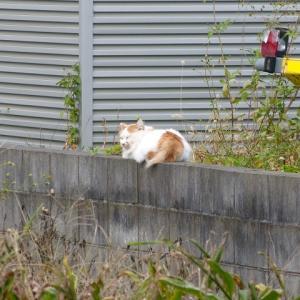 わし、猫のおっさんです  じきに冬やで・・・