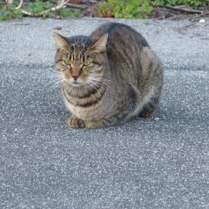 わたし、猫のおばさんです 吹いたらしい・・・