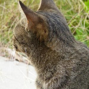 わたし、猫のおばさんです 冬やなぁ・・・