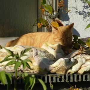 わたし、猫のおばさんです 温(ぬく)いなぁ・・・