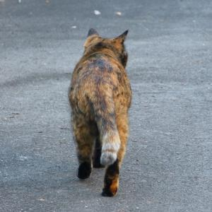 わたし、猫のおばさんです 家帰ろ・・・