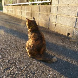 わたし、猫のおばさんです 寂しいなぁ・・・