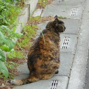 わたし、猫のおばさんです 居らへん・・・