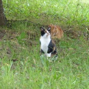 わたしら、猫のおばさんとおっさんです あんのかなぁ・・・