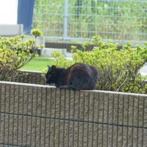 わし、猫のおっさんです 暑なってきたで・・・