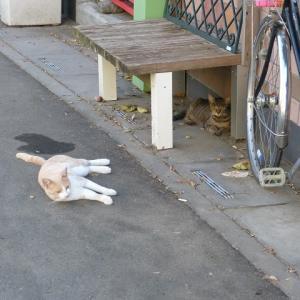 わたしら、猫のおばさんとおっさんです 暑い日が始まったなぁ・・・